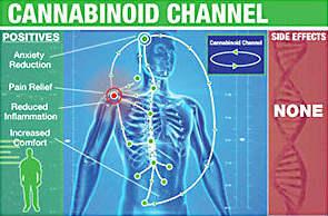 cbd for chronic pain