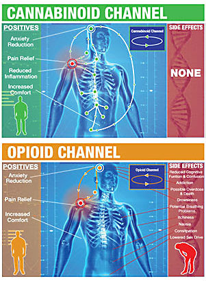 chronic pain opioids or cannabinoids