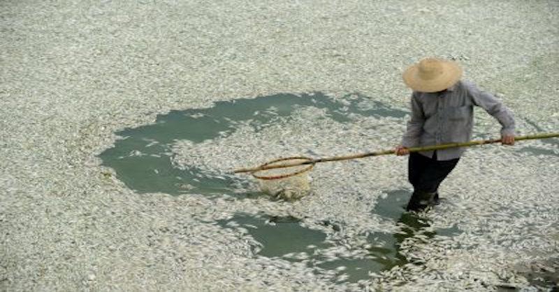 Fu river,contamination
