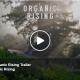 organic rising trailer